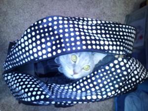 Cat in travel bag